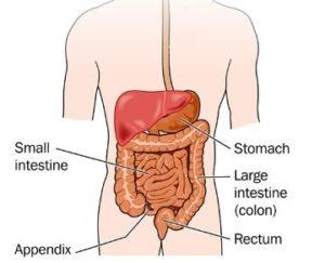 lactose intolerant small intestine